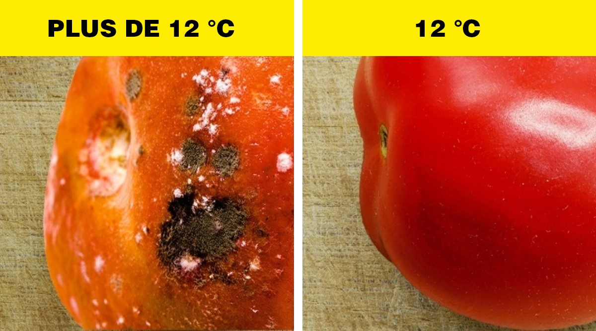 conservation tomates refrigerateur