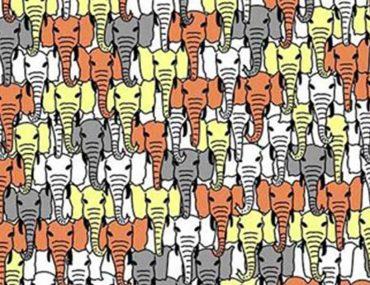 testez-votre-vision-pouvez-vous-reperer-le-panda-cache-dans-ces-elephants