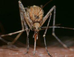 pourquoi-suis-je-pique-par-des-moustiques-voici-les-raisons-scientifiques-qui-lexpliquent