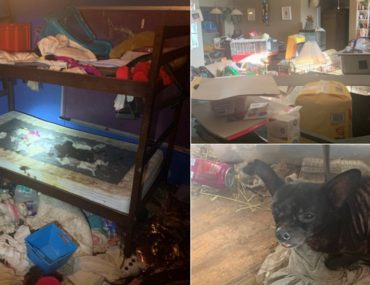 ces-enfants-sont-retrouves-vivants-dans-une-maison-avec-245-animaux