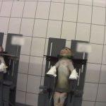 ces-images-horrifiantes-prises-en-secret-dans-un-laboratoire-allemand-montrent-des-animaux-en-train-de-souffrir