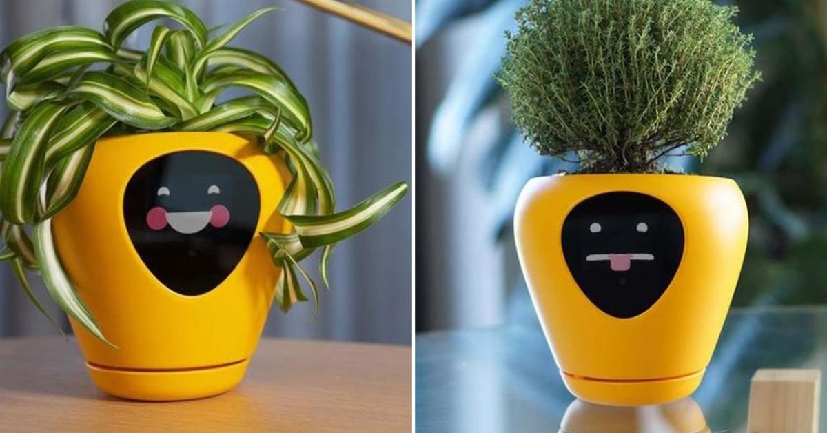 cette-nouvelle-jardiniere-intelligente-montre-les-sentiments-de-vos-plantes-dinterieur