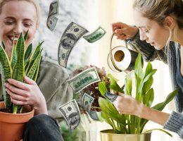 ces-plantes-attireront-labondance-et-les-bonnes-vibrations-dans-votre-maison