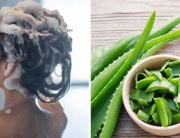 voulez-vous-que-vos-cheveux-poussent-plus-vite-et-plus-forts-preparez-et-utilisez-ce-shampooing-naturel-a-laloe-vera